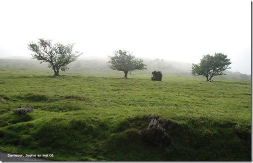 arbres dans le dartmoor