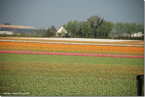 le jardin c 39 est tout les tulipes de haarlem. Black Bedroom Furniture Sets. Home Design Ideas