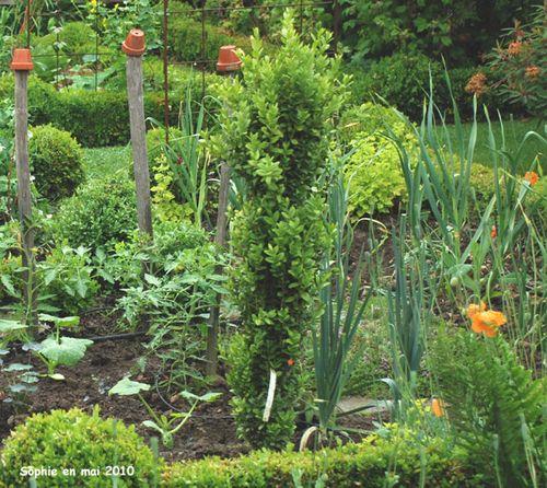 Buxus graham blandy