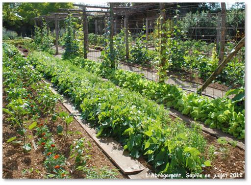 Le jardin, c\'est tout !: Un vrai potager