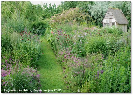 Le jardin c 39 est tout pour remplacer les buis du potager for Haie de jardin en belgique