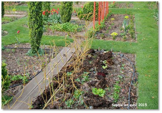 Le jardin, c\'est tout !: Il faut toujours avoir un saule au jardin!
