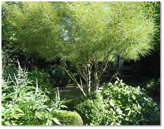 Le jardin, c\'est tout !: Le travail et le tempo des arbres
