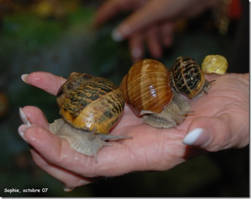 4 escargots