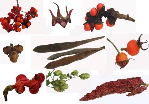 bouquets de fruits
