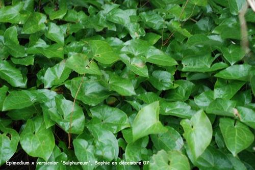 Le Jardin, C'est Tout !: Arbustes