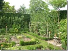 framboisiers du jardin