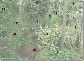 jardin blanc en aout nb