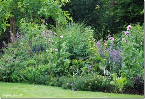 massif lilas en juin 07