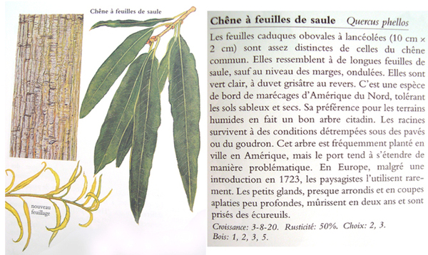 Encyclopedie_des_arbres9